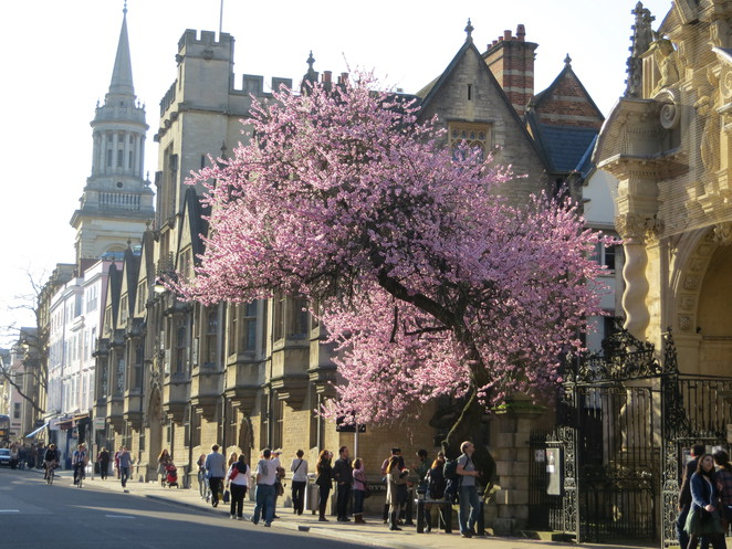 pink, tree, oxford, spring, high, street