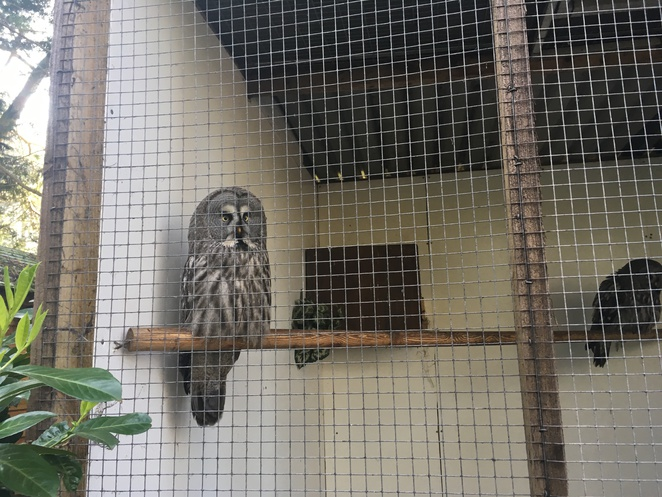 owl, turbary woods, bird sanctuary, family, kids, day out