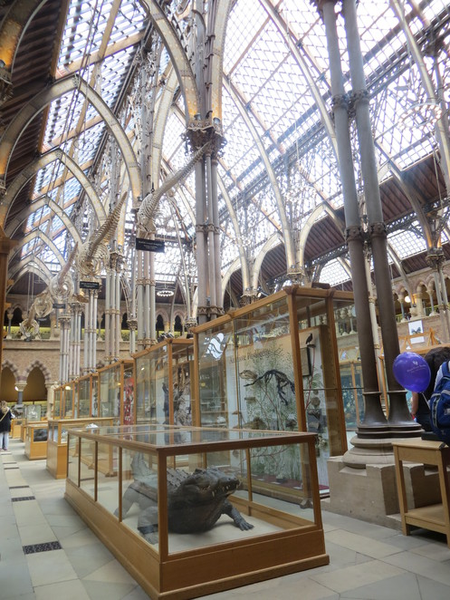 oxford, museum, natural, history