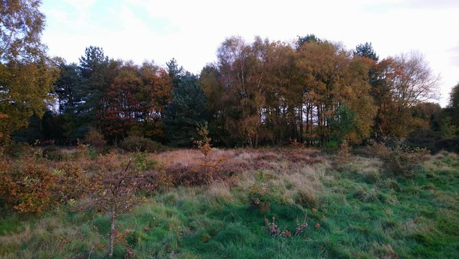 Brownhills Common
