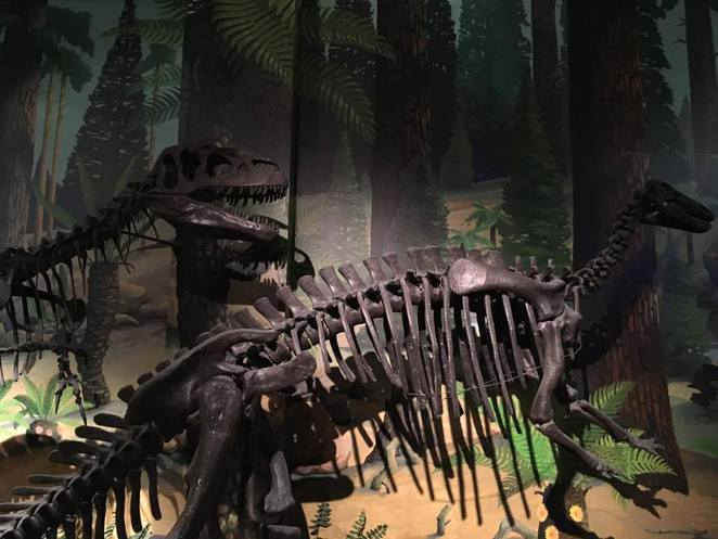 dinosaur, liverpool, world museum, family day out