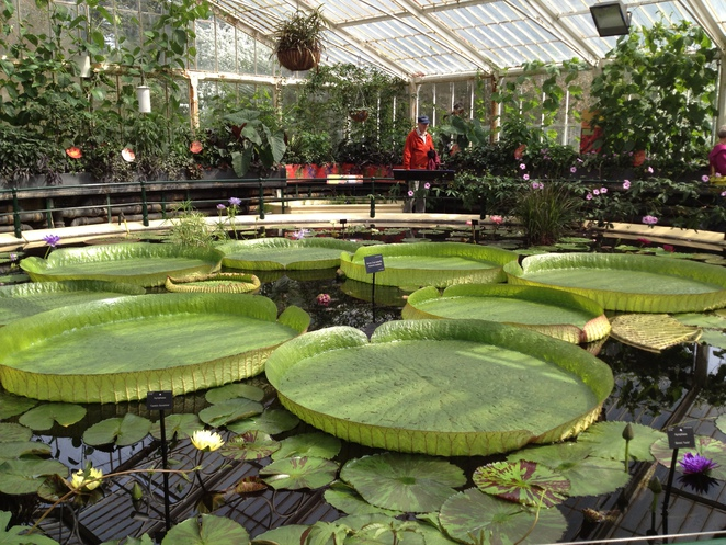 Flavour Fiesta in the Waterlily House, Kew