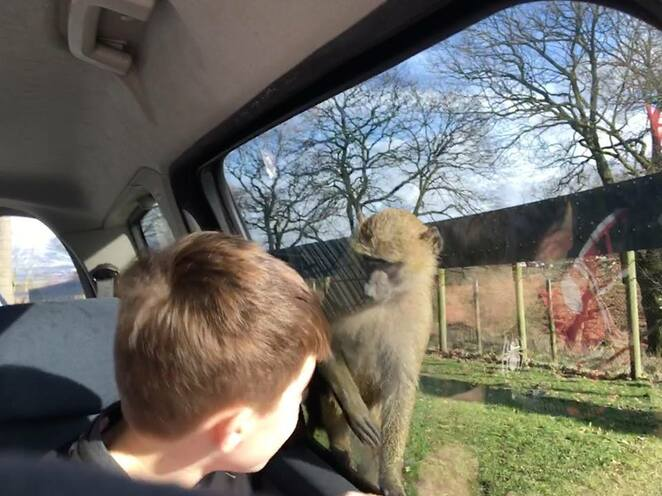 monkeys, safari, Knowsley Safari Park, school holidays, family fun
