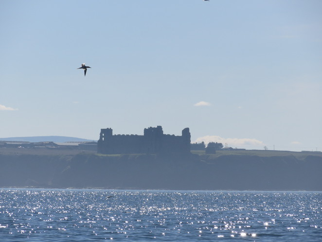 tantallon castle, north berwick, firth of forth, edinburgh, bass rock