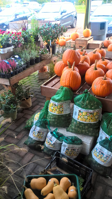 Dents Farm, Hilgay, pumpkins, plants, farmers market, fresh produce, fruits, vegetables, shopping, Norfolk, Downham Market, Hilgay, Farms, Dents