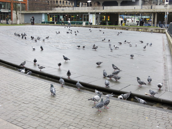 manchester, piccadilly, tadao, fountain, pigeons