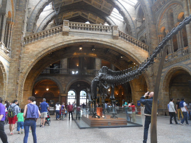 natural history museum, central hall