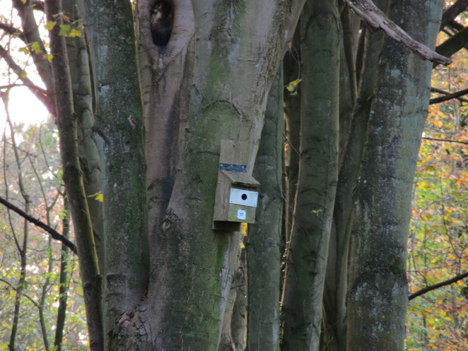birdbox, cs, lewis, nature, reserve