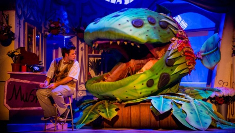 Little Shop of Horrors, UK Tour, Review, Rhydian, Weekend Notes, Birmingham New Alexandra Theatre, cult musicals