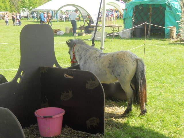 morden hall country show, oakleigh fairs, pony