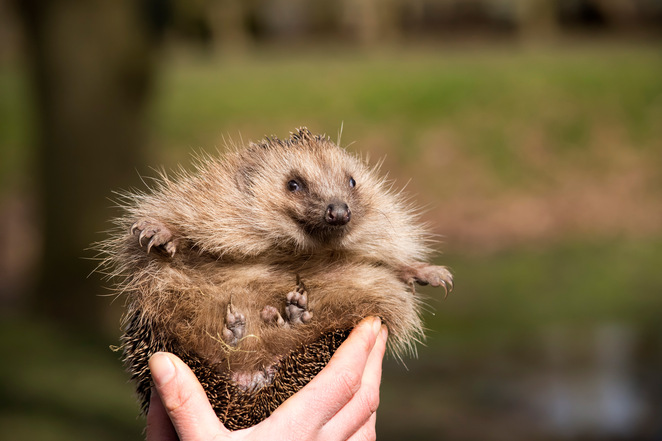 British wildlife, British animals, wildlife photography, things to do in Surrey, photography course, hedgehog, cute animal photos