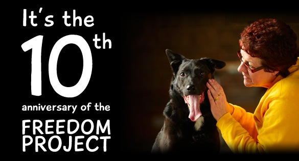 dogs' trust, freedom project, foster a dog