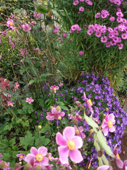 Ludlow's Festival of Small Gardens