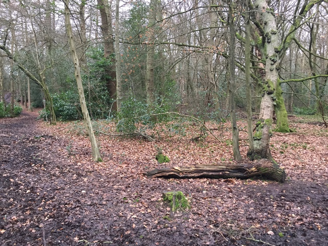 Woodland Walk in The Lickey Hills