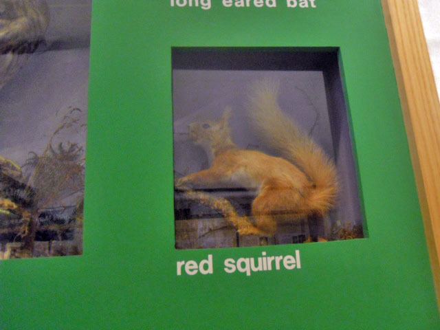 wimbledon society museum, red squirrel, taxidermy