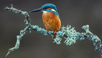 british wildlife, exhibition, photography