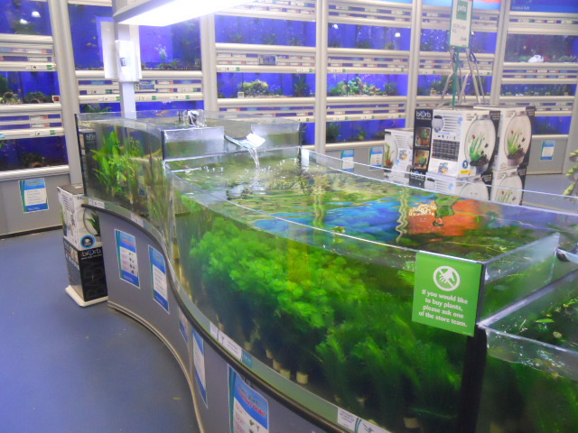 pets at home, fish, fish tanks
