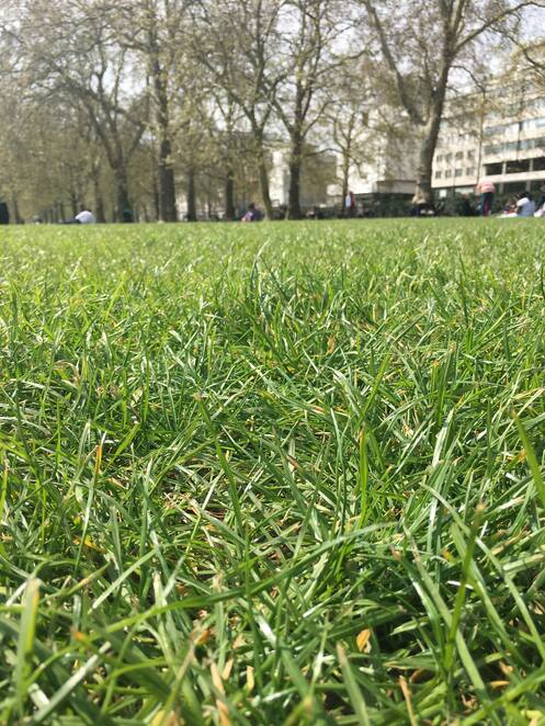Green, Park, London, grass, picnic, outdoor