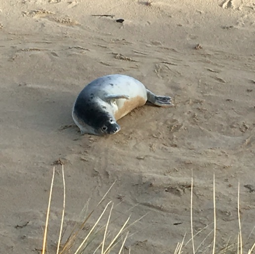 Young baby seal at the back of the beach