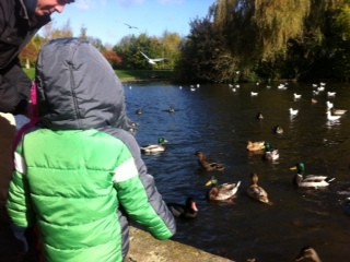 Ducks feeding, Cutteslowe Park, Oxford