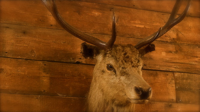the, elk, in, woods, deer, stag, interior, decor, islington, camden, east, london