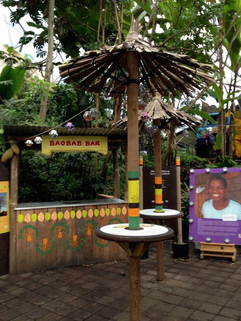 eden project, cornwall, education, plants, nature, forest, conservation, charity, biomes, domes, juice bar, baobab
