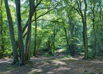 epping forest, memory walk, alzheimers