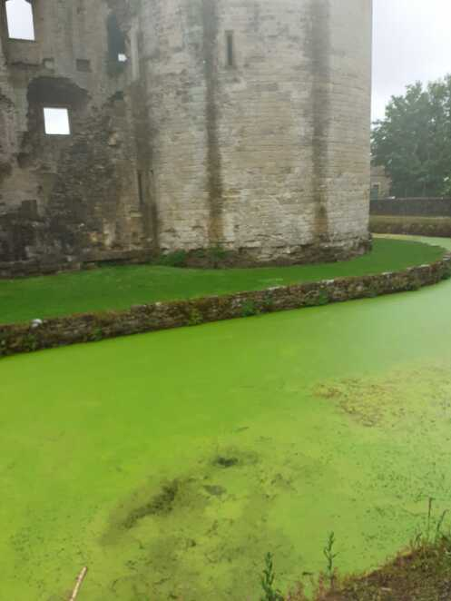 Algae in the lake