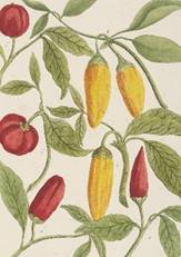 Botanical art notebooks, stationery from. The bodleian library