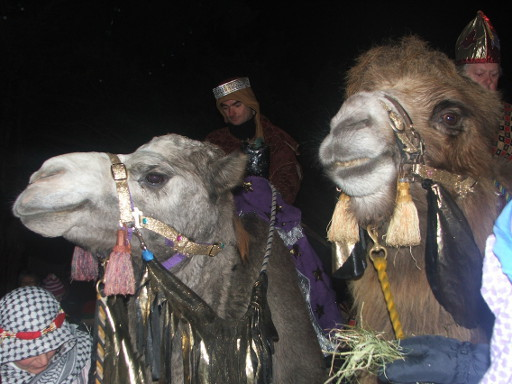 camel procession sshields