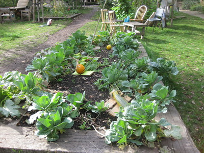 Dalston East Curve Garden vegetables