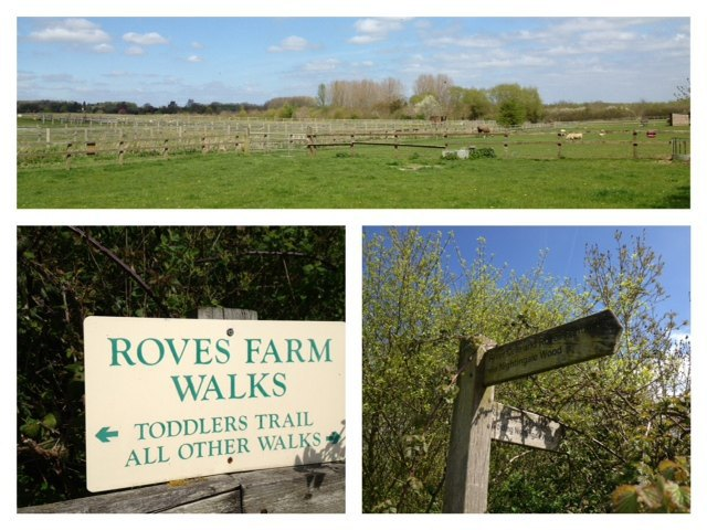 Roves Farm, days out, children, kids, animals, petting, feeding, bottle feeding, goats, lambs, tractor rides, indoor, soft play, sandpit
