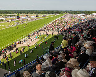 royal ascot, royal enclosure