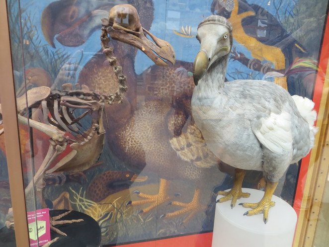 dodo, natural history museum, oxford, alice, wonderland