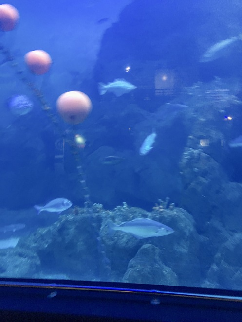aquarium,sharks,stingray,fish,ocean,sealife