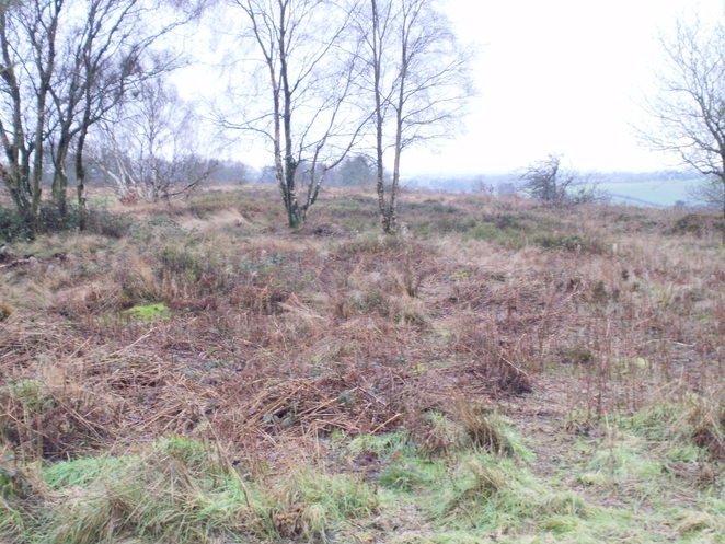 Gentleshaw Common