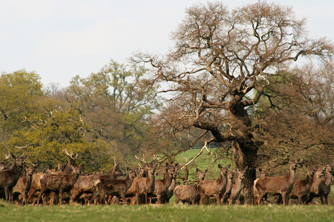 deer, spotting deer, best places to see deer, new forest, deer in new forest