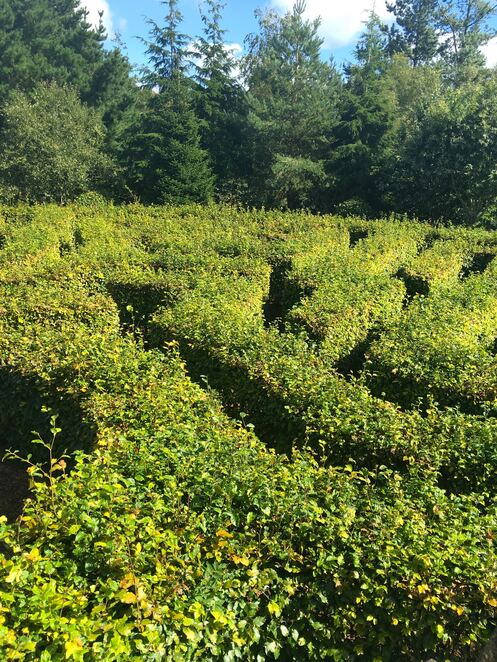 hedge maze,hidden valley,park,walking,family fun,cornwall