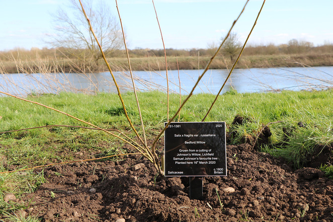 Johnson's Willow, National Memorial Arboretum