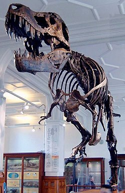 Manchester museum, Stanley, Dinosaur, T-rex, culture, pre-historic, history, Quarantine, teaching, children, home school