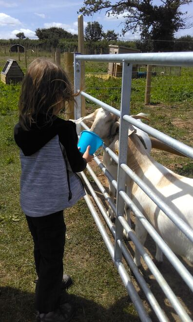 oinkers,cafe,drakes,farm,animals,coffee,family,outdoors,friendly,petting zoo