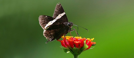 nature trek, butterflies, tours
