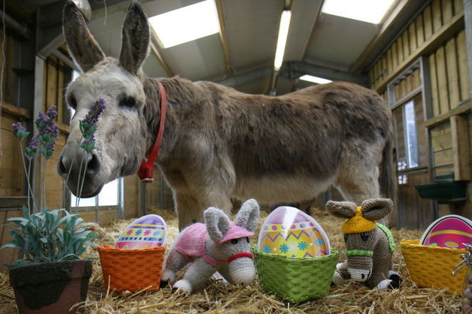 Donkey Sanctuary ,Birmingham, Sutton Coldfield, easter ideas for children,