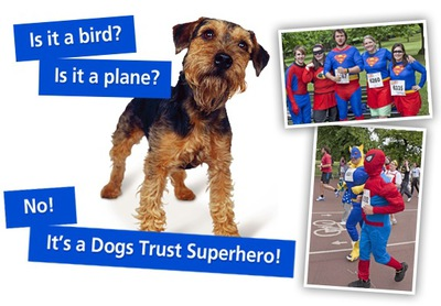 dogs trust, superhero run