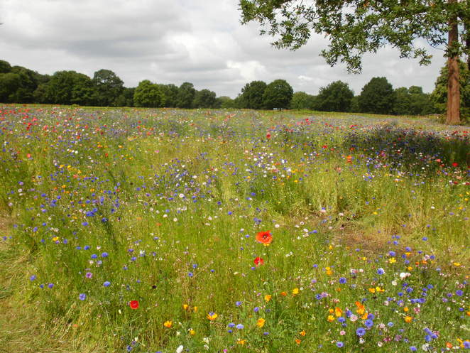 Trentham Gardens, Capability Brown, meadow