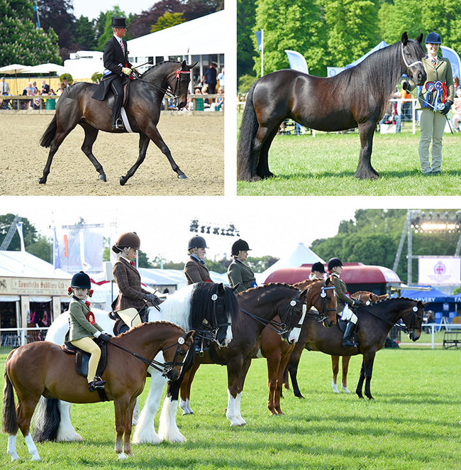 Horse showing RWHS