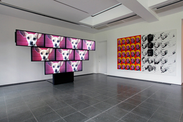 leaps, jumps, and bumps, serpentine gallery, Sturtevant