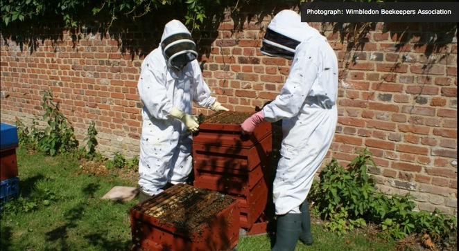 wimbledon bee keepers' association