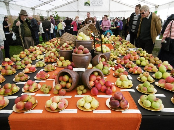 Malvern Autumn Show, Royal Horticultural Society, Garden Shows, Carol Klein, Gyles Brandreth, Three Counties Showground Malvern