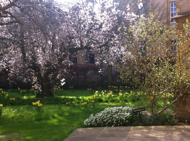 spring, merton, college, oxford, flowers